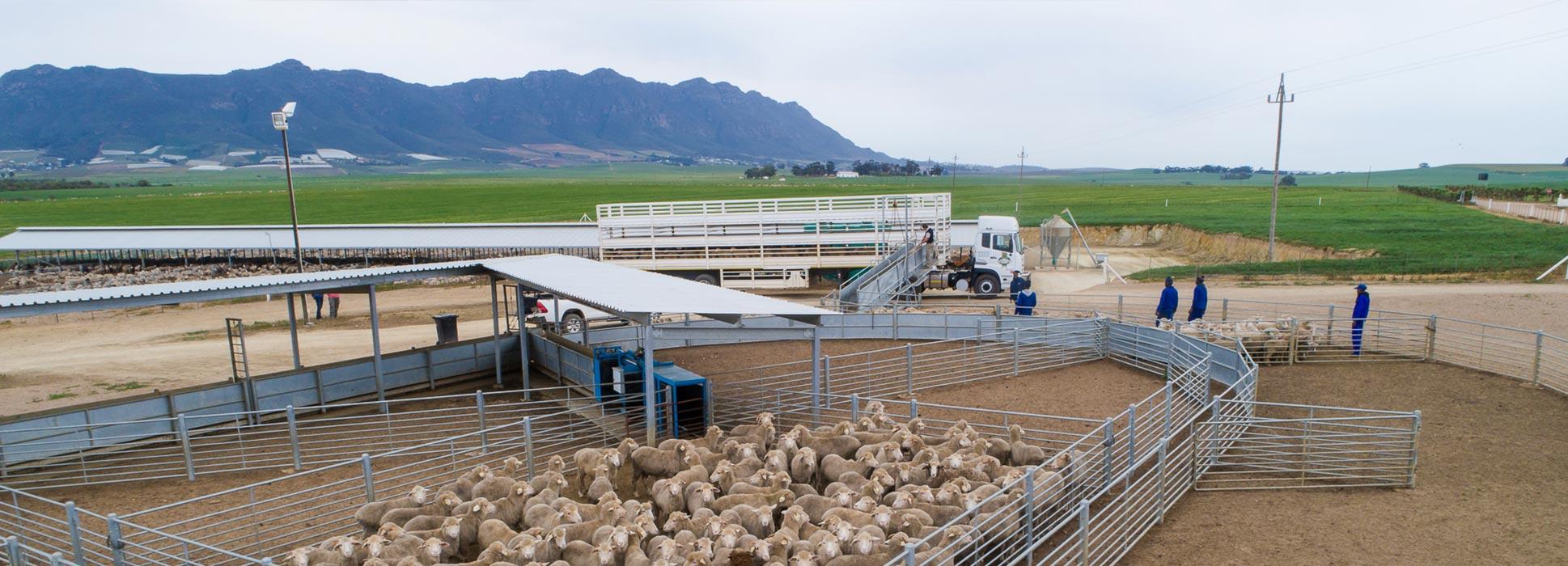 Deli-Co lamb feeding facility